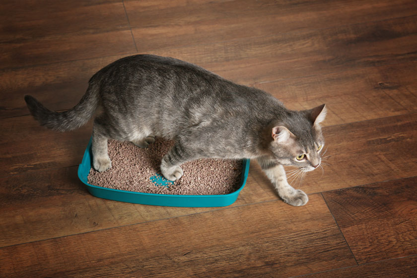 Katzenstreu in einer Box ohne Katzenklo-Matte