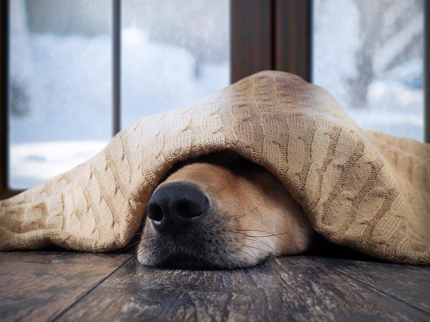 Hund unter einer Hundematte