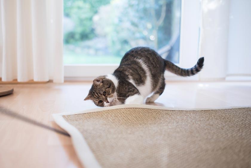 Katze auf Sisalteppich vor dem Reinigen